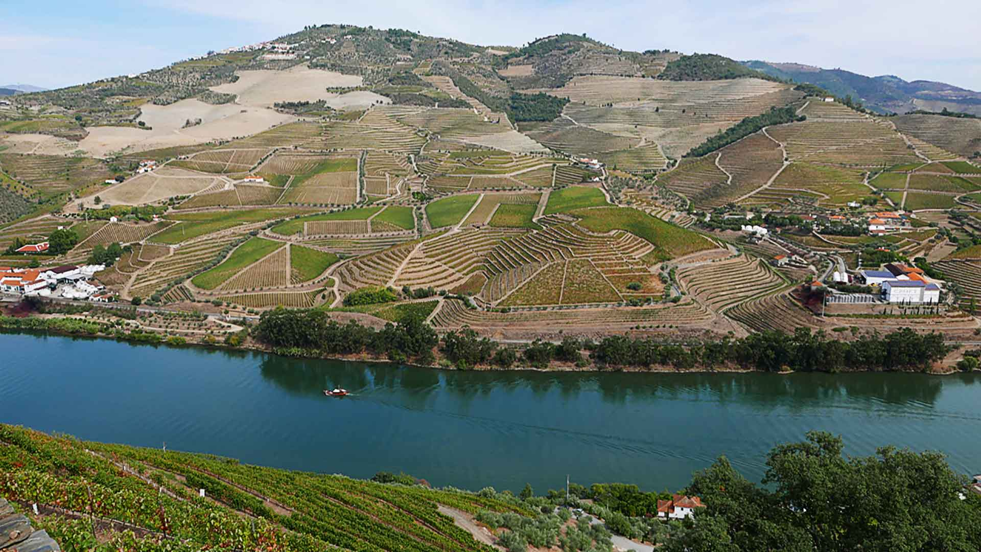 Grapes for Port wine in wonderful Douro Valley