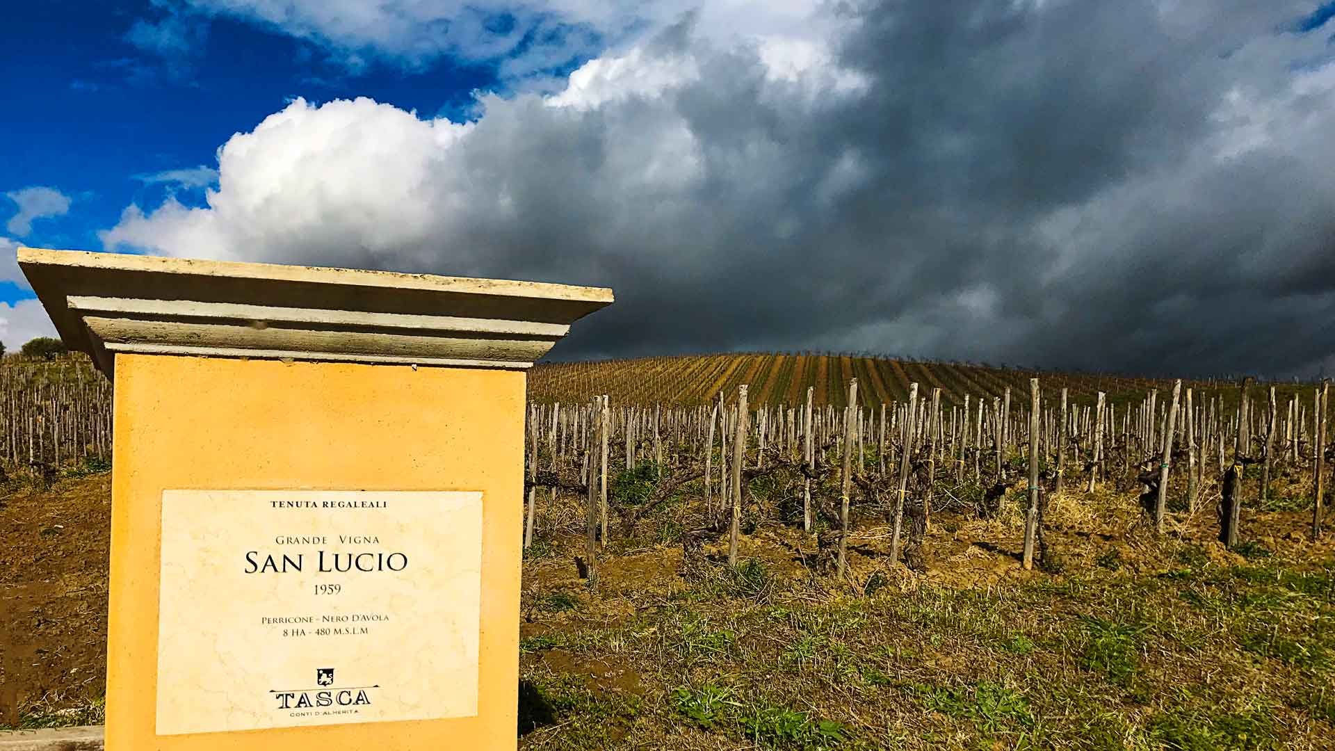 Vineyard San Lucio at Tenuta Regaleali Sicilia