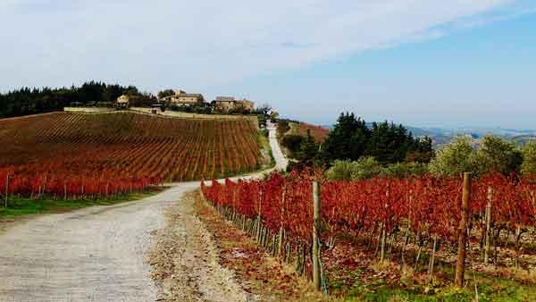 Poggio Santedame in Tuscany