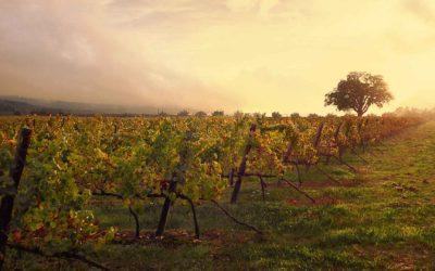 Dão – das (immer noch) unentdeckte Weinland